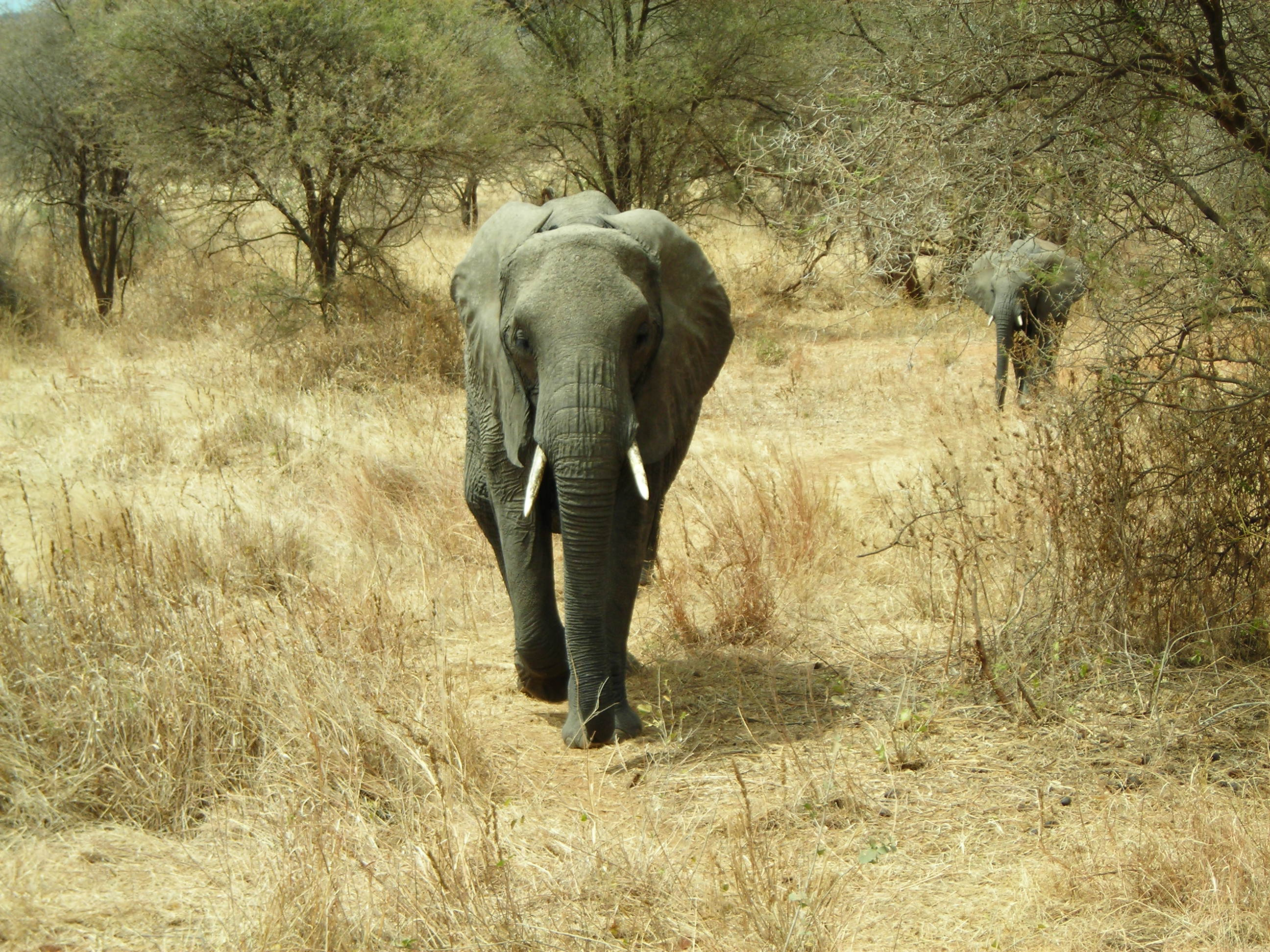 Safari Day 1 DSCN1715 Coming at car