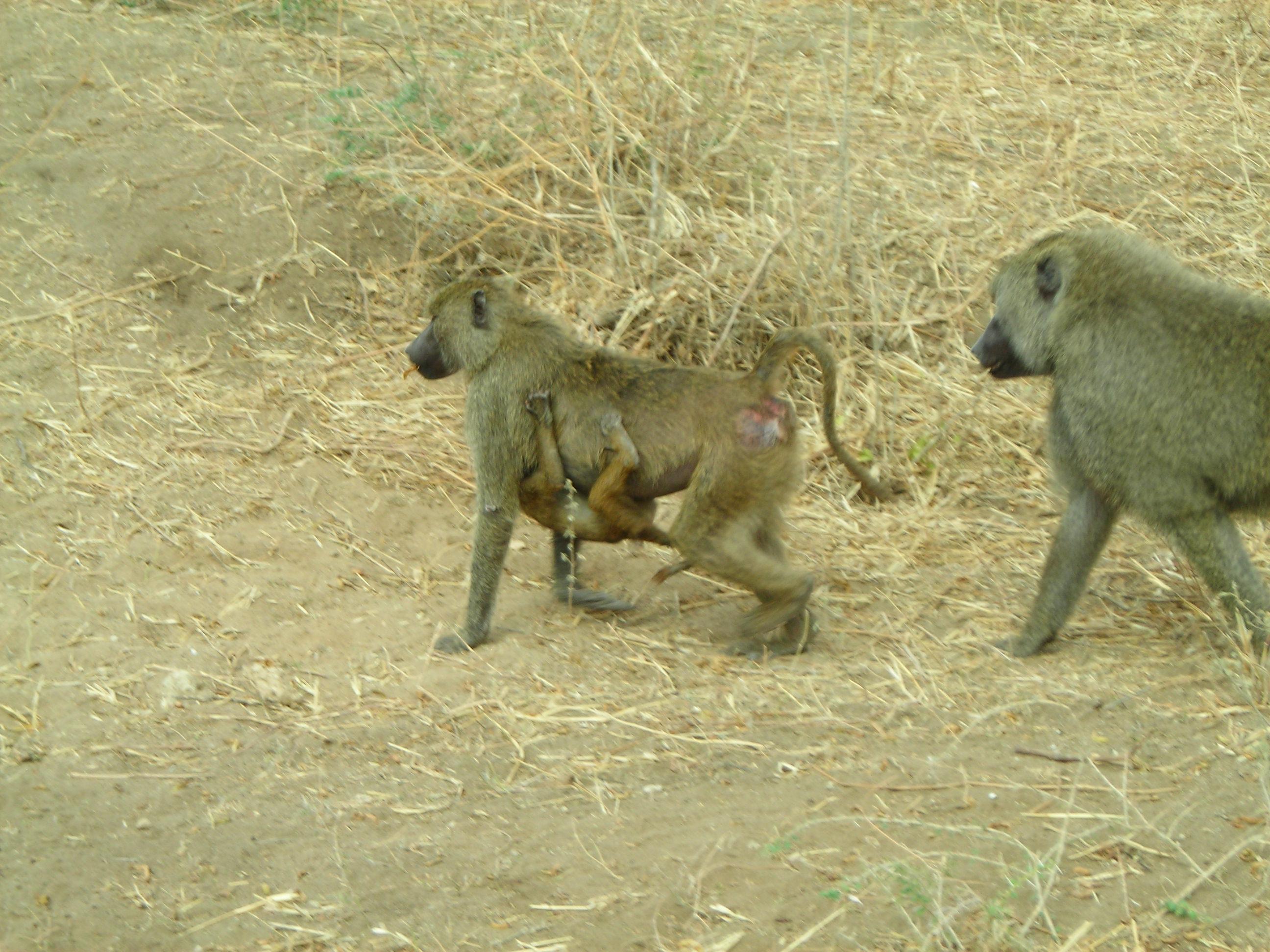 Safari Day 1 DSCN1734