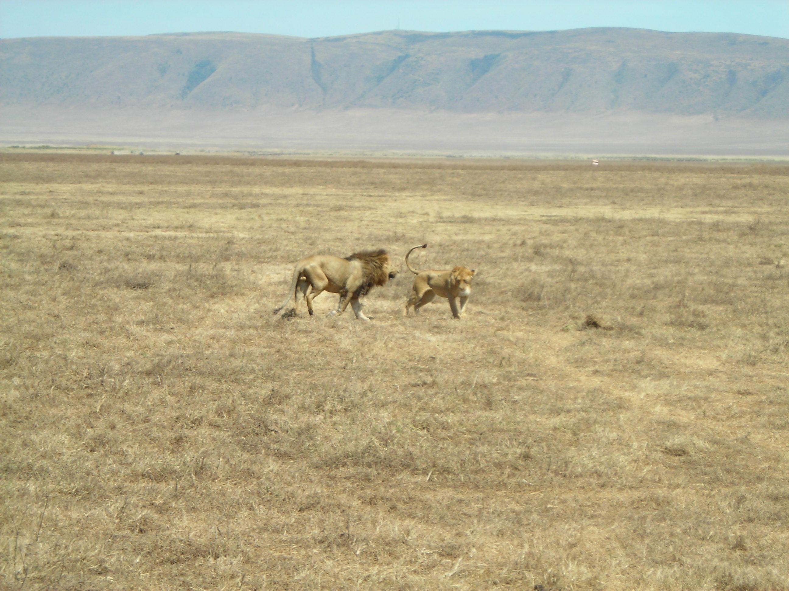 Safari Day 3 DSCN1845