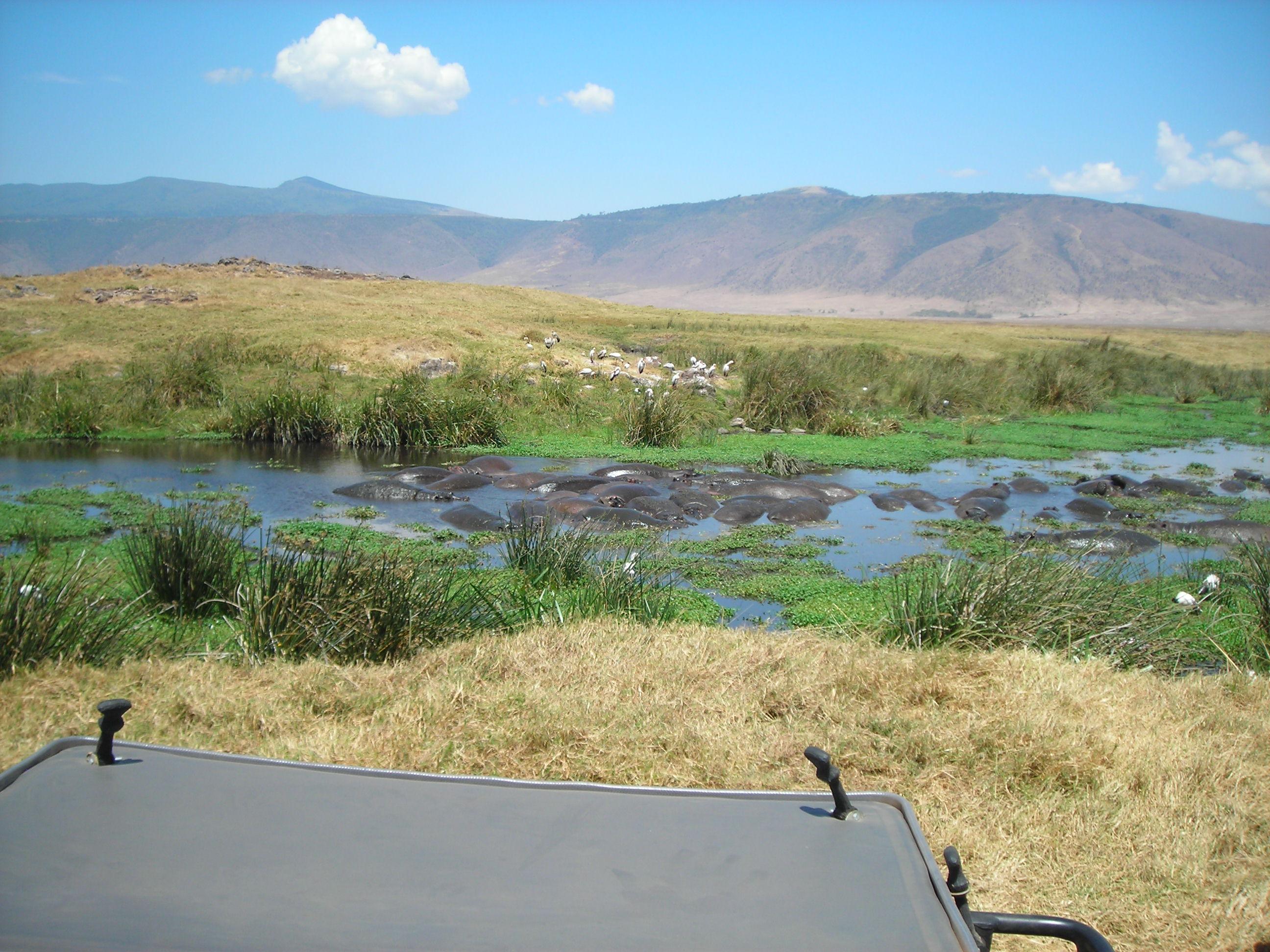 Safari Day 3 DSCN1849 Hippo Pool