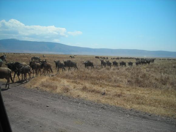 Safari Day 3 DSCN1863