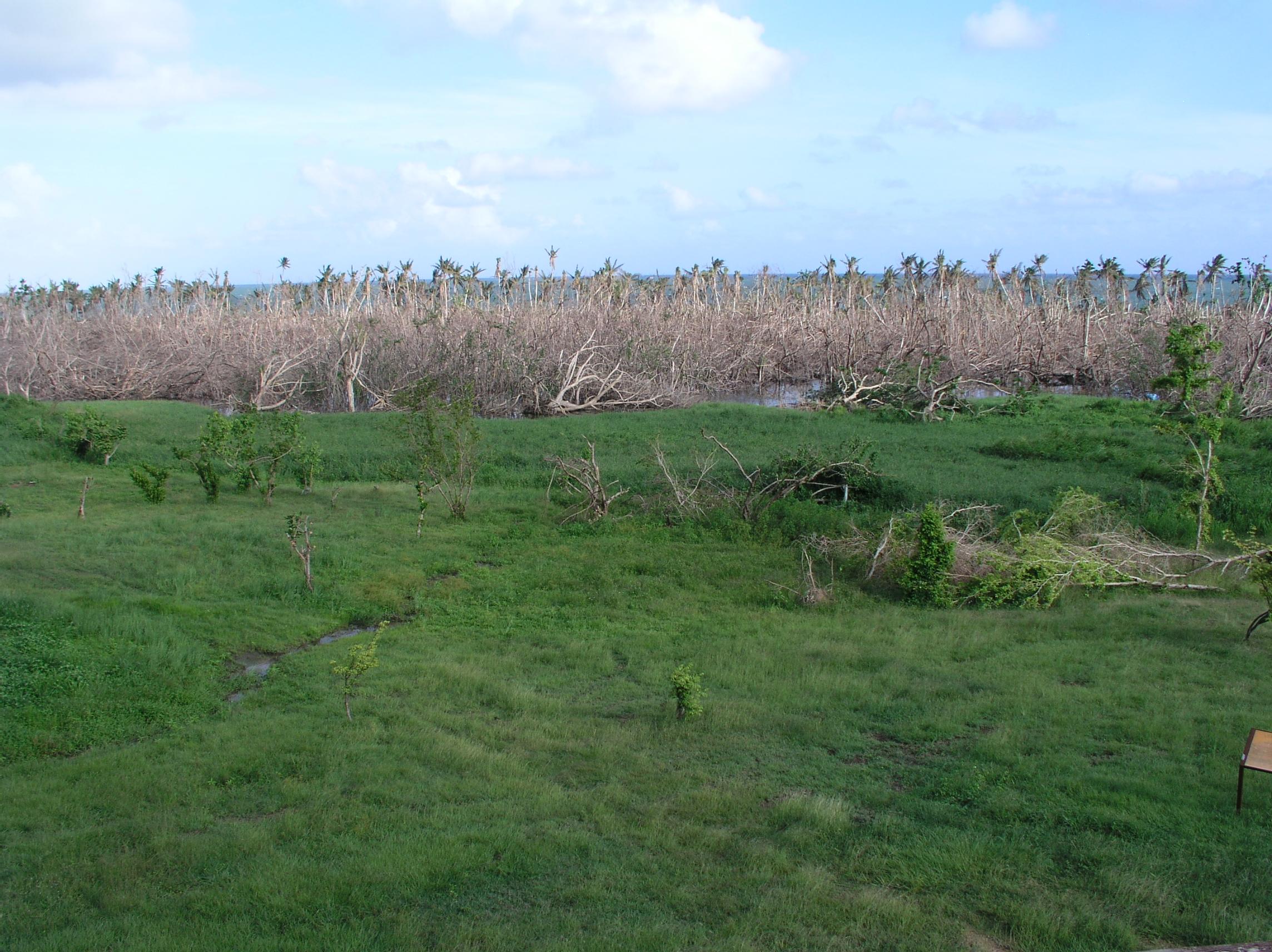 Devastated coastal vegetation.